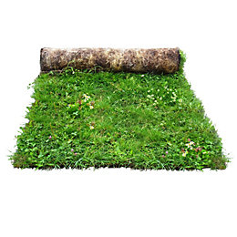 Q Lawns Wildflower Turf (W)1000mm (L)1000mm, Rolls Of