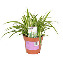 20% off all live plants