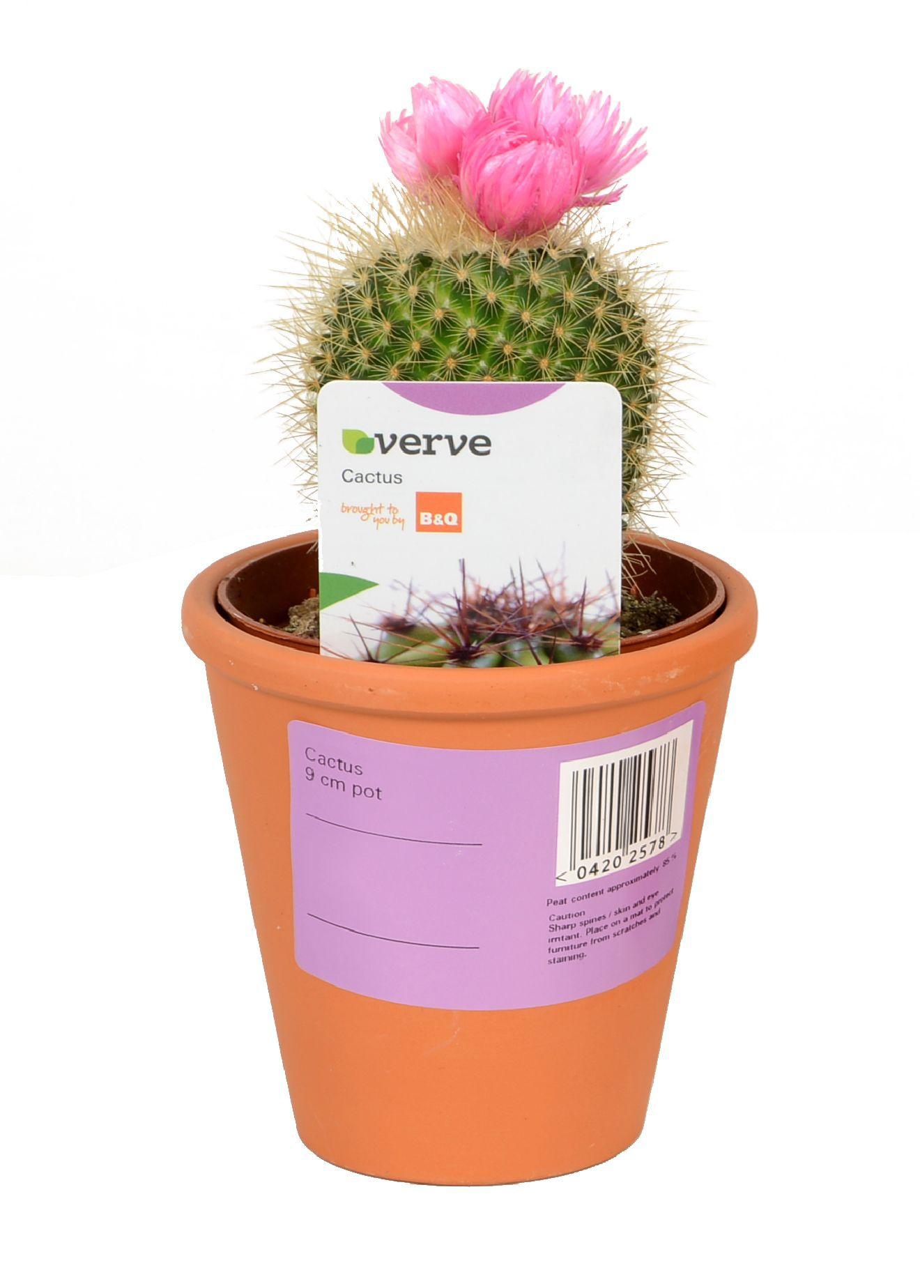 Artificial Plants Indoor Kitchens