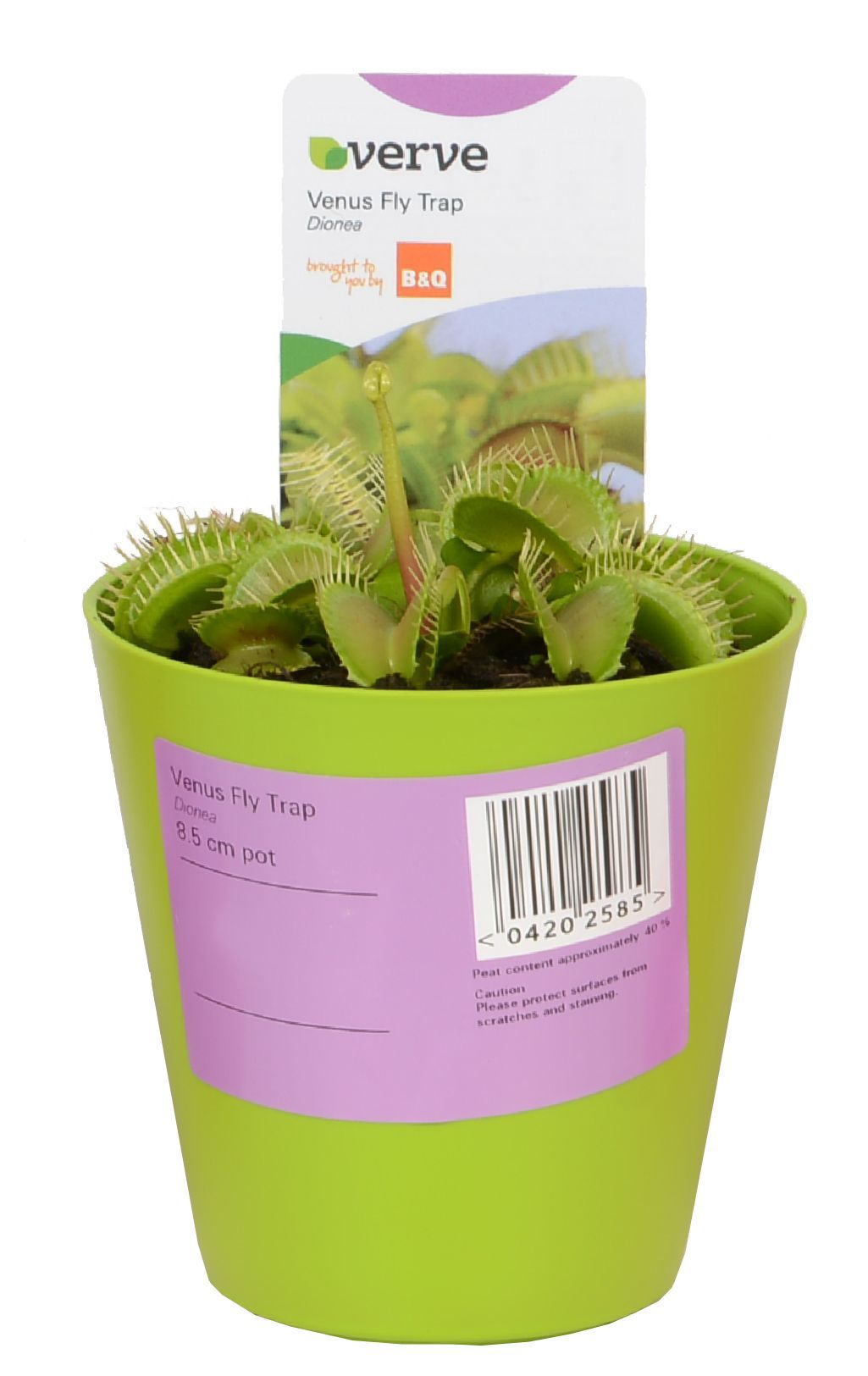Verve Venus Fly Trap In Plastic Pot Departments Diy At B Amp Q