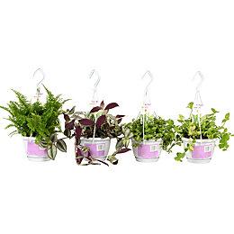 Verve Hanging Plant In Plastic Pot