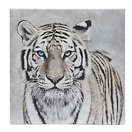 Tiger Black & White Canvas (W)450mm (H)450mm