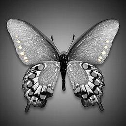 Butterfly Mono Canvas Art (W)75cm (H)75cm