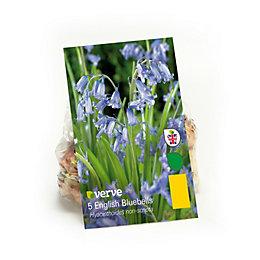 Hyacinthoides English Bluebells Bulbs