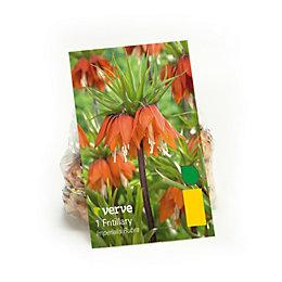 Fritillary Fritillaria Imperialis Bulbs