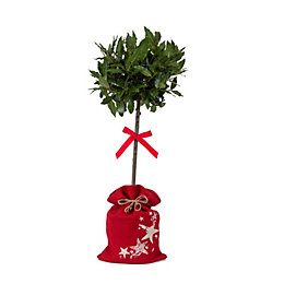 Half Standard Bay Tree In Christmas Hessian Bag