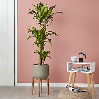 Swell House Plant Buying Guide Ideas Advice Diy At Bq Lamtechconsult Wood Chair Design Ideas Lamtechconsultcom