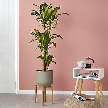 Buying and choosing houseplants online