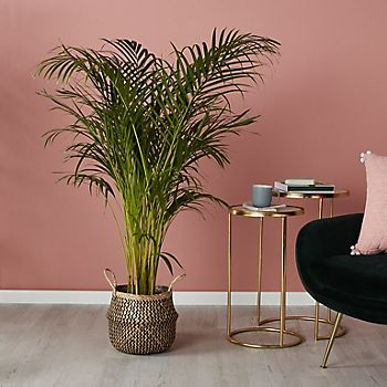 houseplant in wicker planter