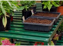 store seed tray in a greenhouse