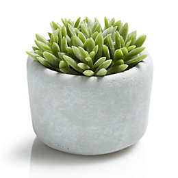 Cactus Cement & Plastic Decorative Plant, Small