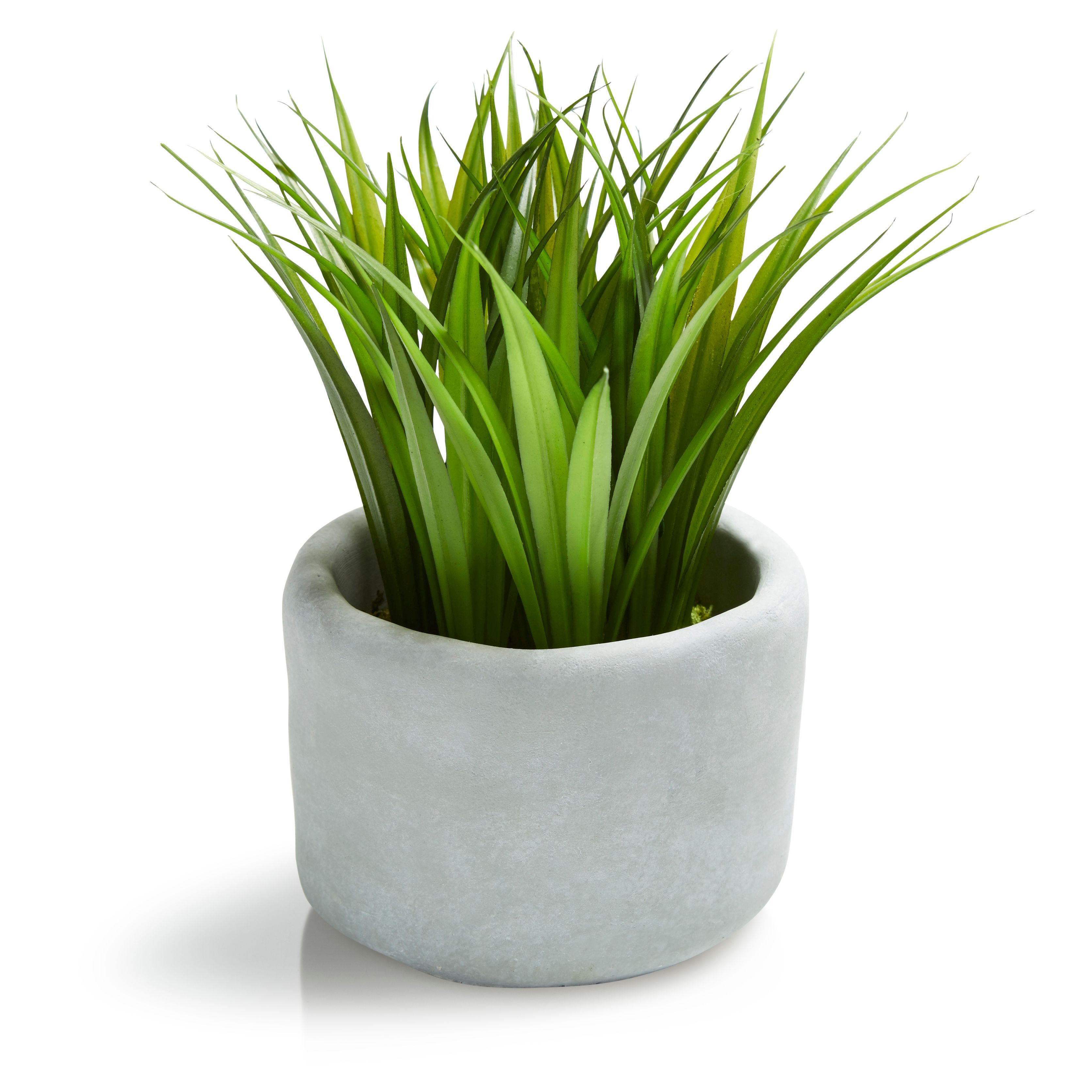 Grass decorative plant small departments diy at b q for Small decorative grasses