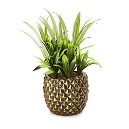 Pineapple Pot with Plant