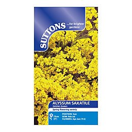 Suttons Alyssum Saxatile Seeds, Golden Queen Mix