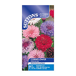 Suttons Cornflower Seeds, Polka Dot Mix