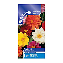 Suttons Dahlia Seeds, Disco Dancer Mix