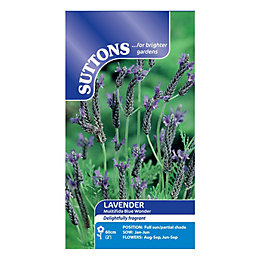 Suttons Lavender Seeds, Multifida Blue Wonder Mix