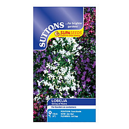 Suttons Lobelia Seeds, String Of Pearls Mix