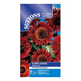 Suttons Sunflower Seeds, Ruby Sunset Mix