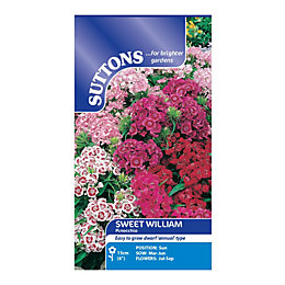 Suttons Sweet William Seeds, Picchio Mix
