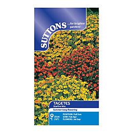Suttons Tagetes Tenuifolia Seeds, Starfire Mix