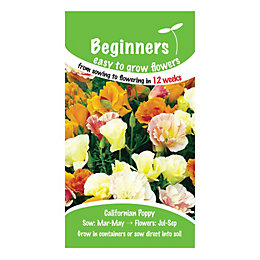 Suttons Beginners Californian Poppy Seeds, Tropical Punch Mix