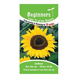 Suttons Beginners Sunflower Seeds, Giant Yellow Mix