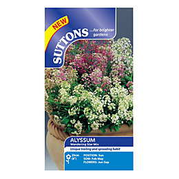 Suttons Alyssum Seeds, Wandering Star Mix