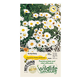Suttons Wildlife Sanctuary Ox Eye Daisy Seeds