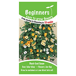 Suttons Beginners Black Eyed Susan Seeds