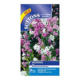 Suttons Hesperis Seeds