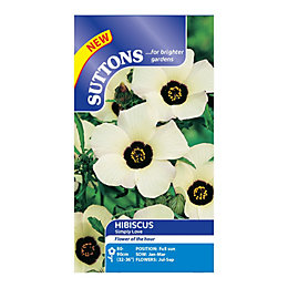 Suttons Hibiscus Seeds, Simply Love Mix