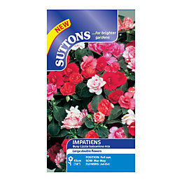 Suttons Impatiens Seeds, Balsamina Mix