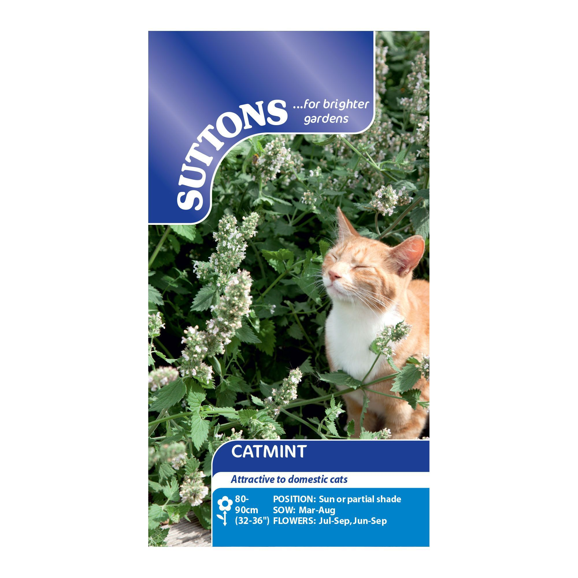 Suttons Catmint Seeds