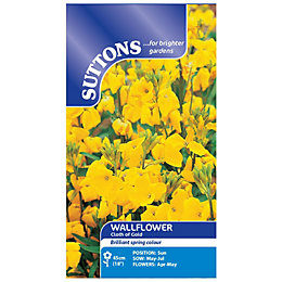 Suttons Wallflower Seeds, Cloth Of Gold