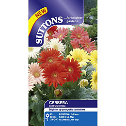 Suttons Cut Flowers Mix Seeds, Non Gm