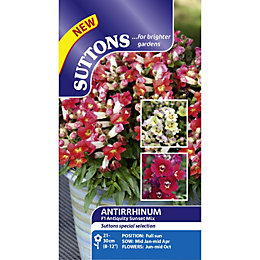 Suttons Antiquity Sunset Seeds, Non Gm