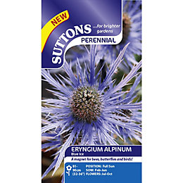 Suttons Alpinum Blue Ice Seeds, Non Gm