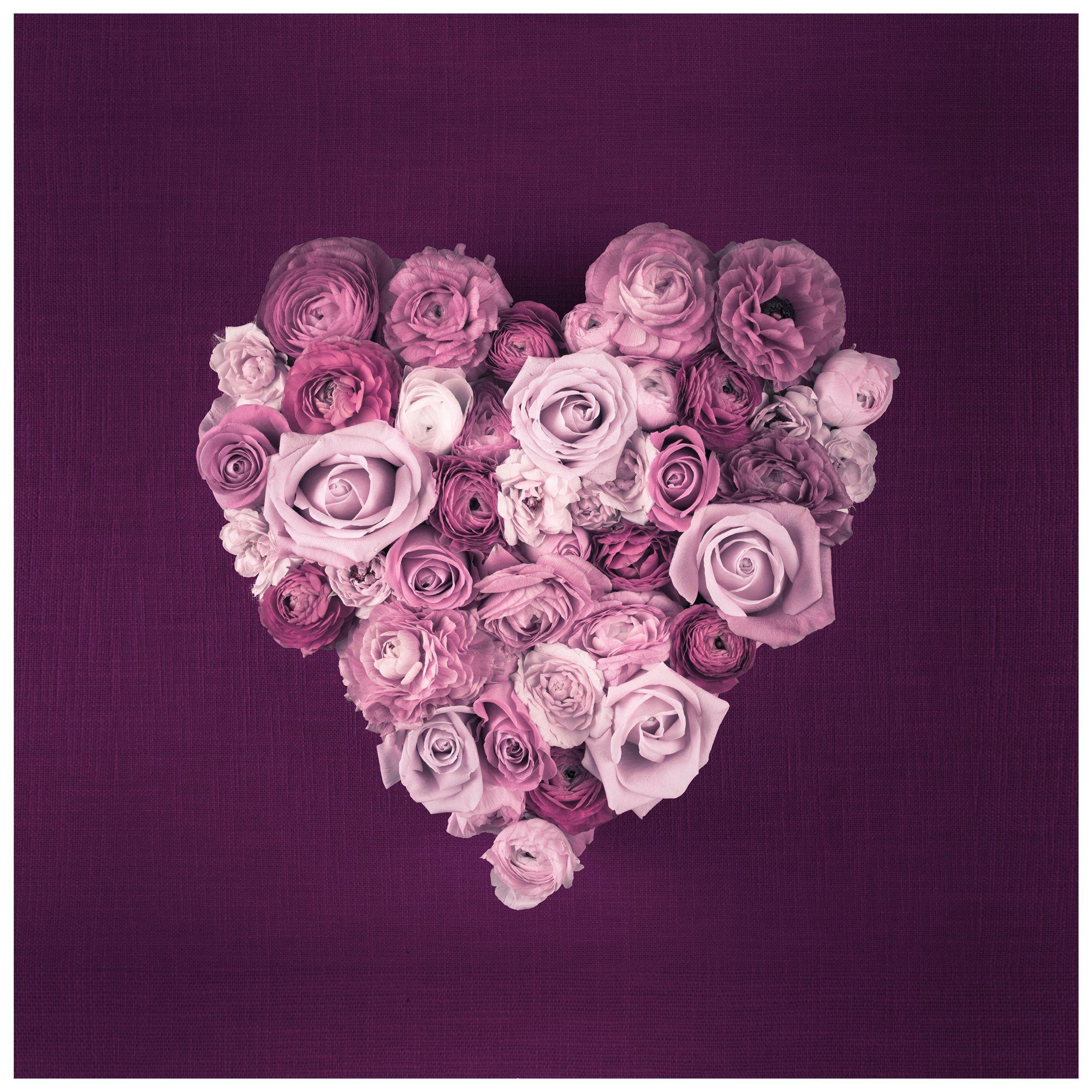 Purple Heart Roses Pink & Purple Wall Art (W)50cm (H)50cm