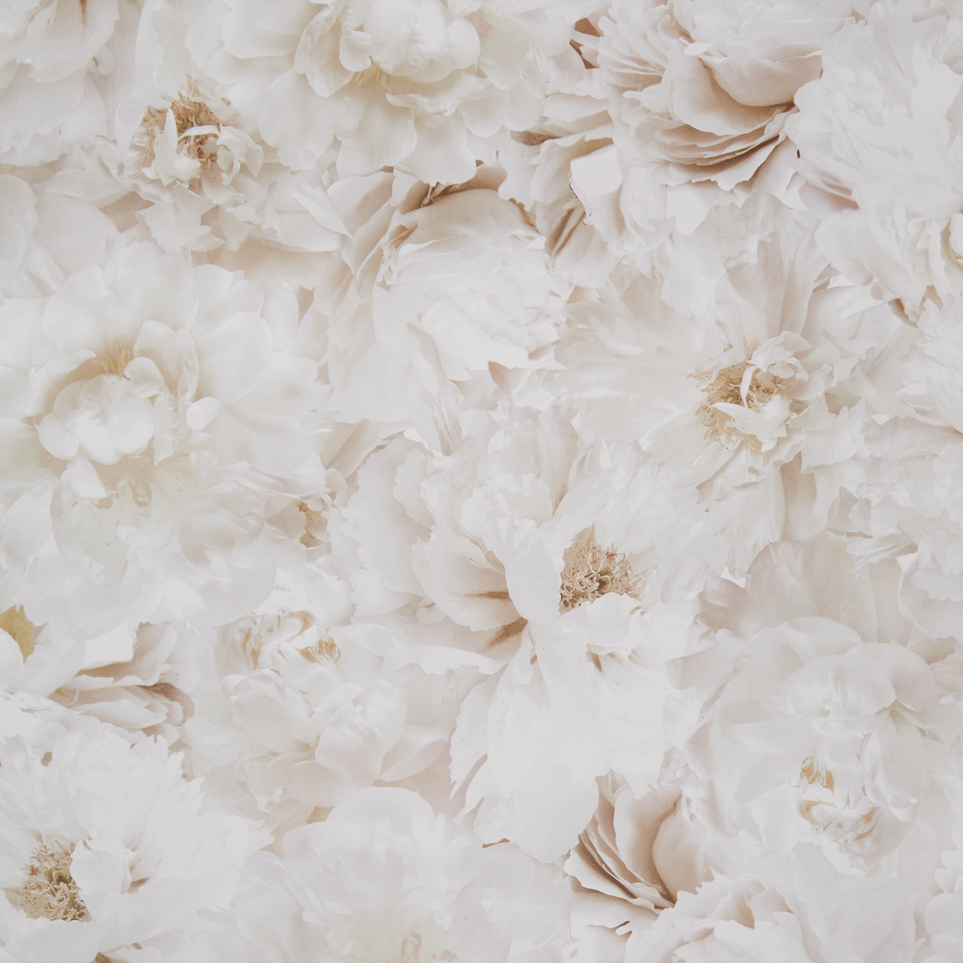 Graham Brown Fresco Cream Floral Wallpaper Departments DIY - Brown and cream wallpaper