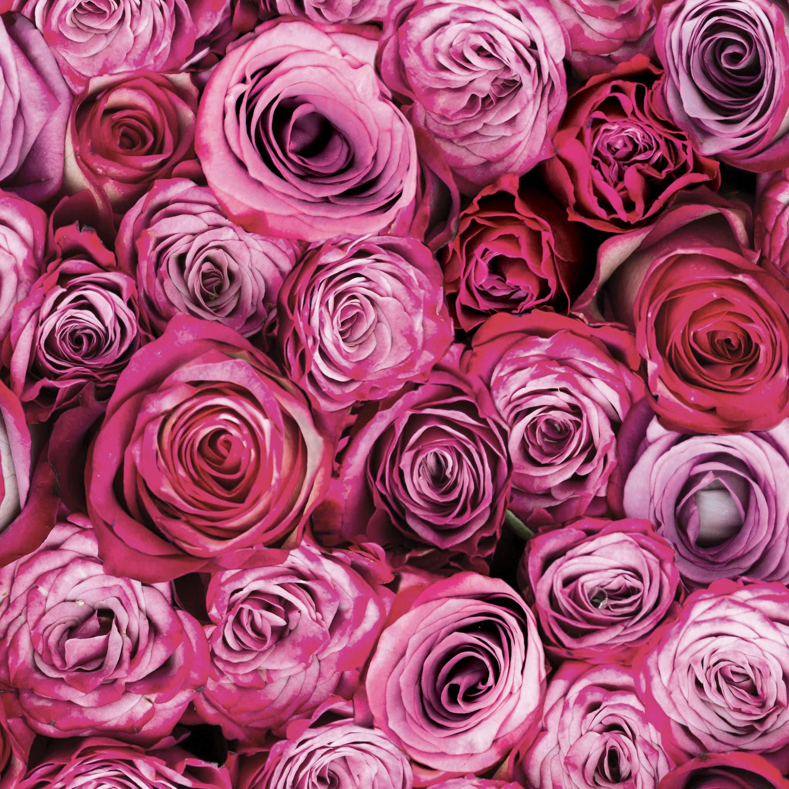 Graham Brown Fresco Pink Roses Wallpaper Departments HD Wallpapers Download Free Images Wallpaper [1000image.com]