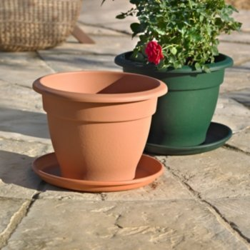 plant and pot and saucer