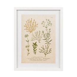 Botanica Alsine White Framed Art (W)330mm (H)430mm