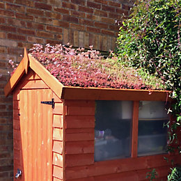 ROOFTRADE Multi-Coloured Living Roof (L)6m (W)1m, Kit