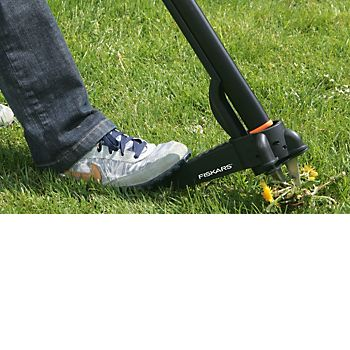 weeder removing weed from lawn