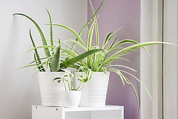 collection of fern houseplants