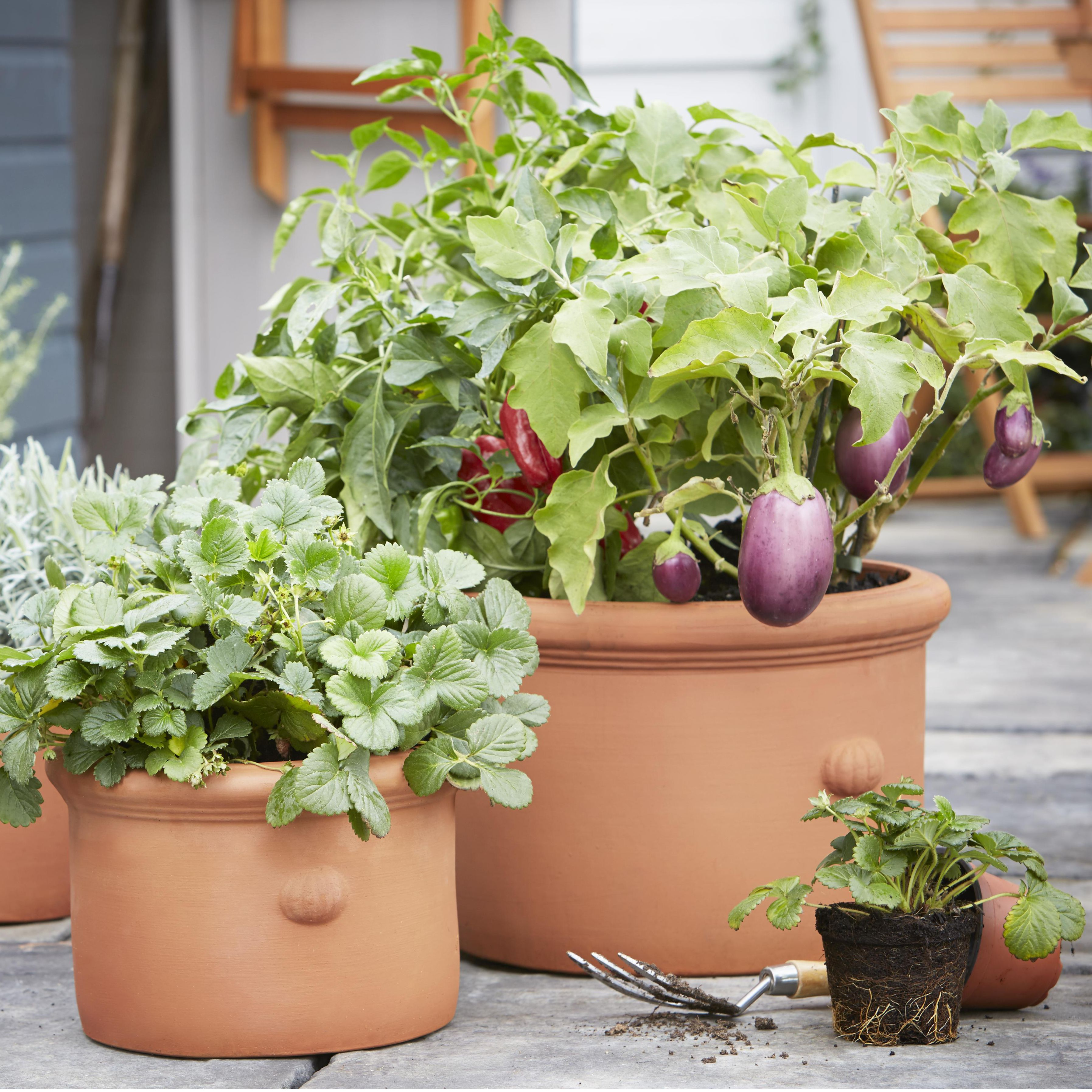 Buyer 39 s guide to compost help ideas diy at b q - Seven tricks for healthier potted plants ...