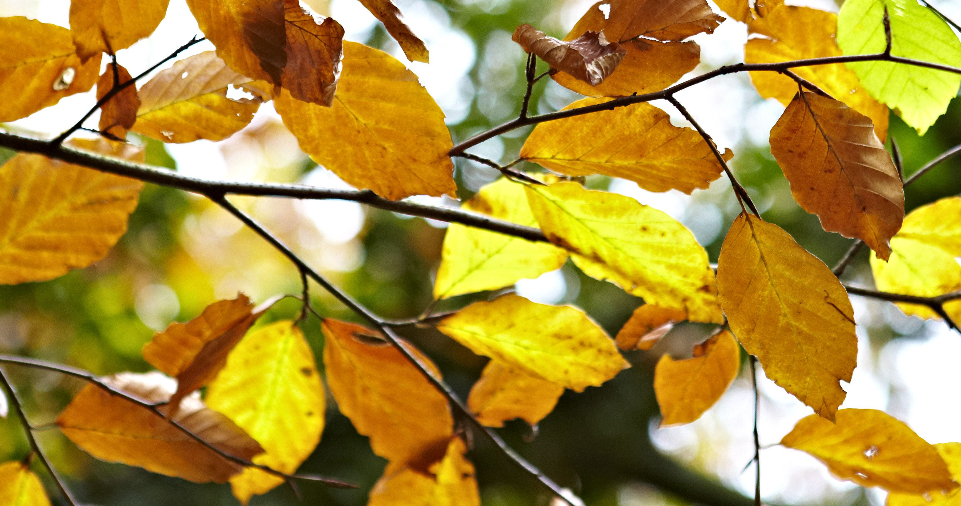 Autumn Gardening Ideas Things To Do In October Help