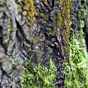 Tree trunk with moss
