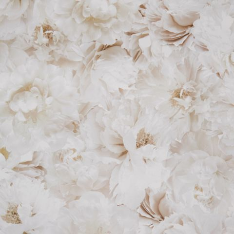 Fresco Cream Floral Wallpaper